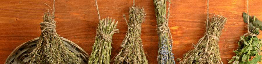 Ervas medicinais secas