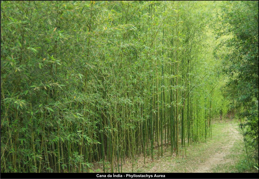 Cultivo bambu cool cultivo vertical de abboras usando o - Suelo de bambu ...