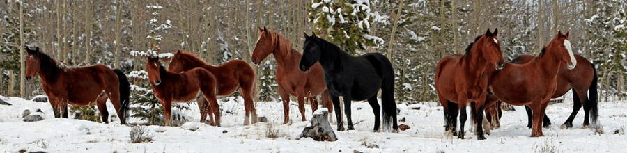 Cavalos na neve