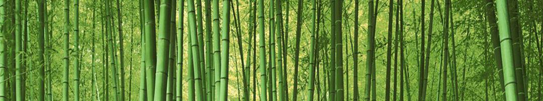Introdução ao bambu