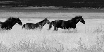 A verdade sobre a gestão dos cavalos selvagens americanos