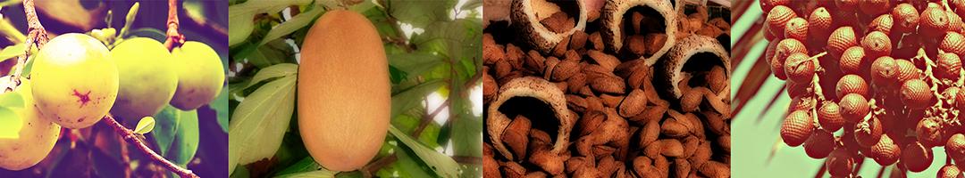 Frutos nativos indígenas para conhecer, plantar e consumir, sem moderação.