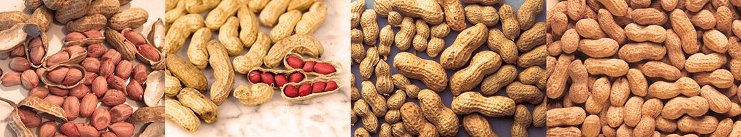 Hortaliças e leguminosas indígenas: Saiba tudo sobre o Amendoim